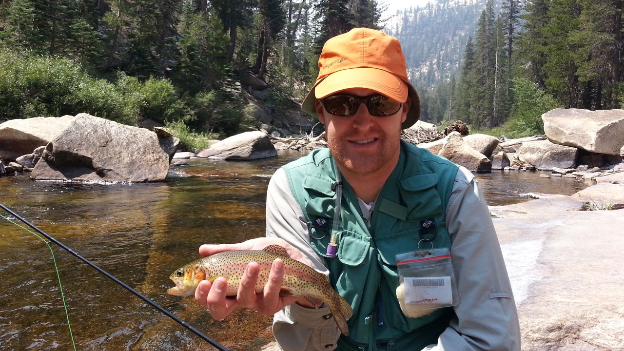 A fly angler with an orange hat holding a wild rainbow trout from the San Joaquin River near Mammoth Lake, CA.