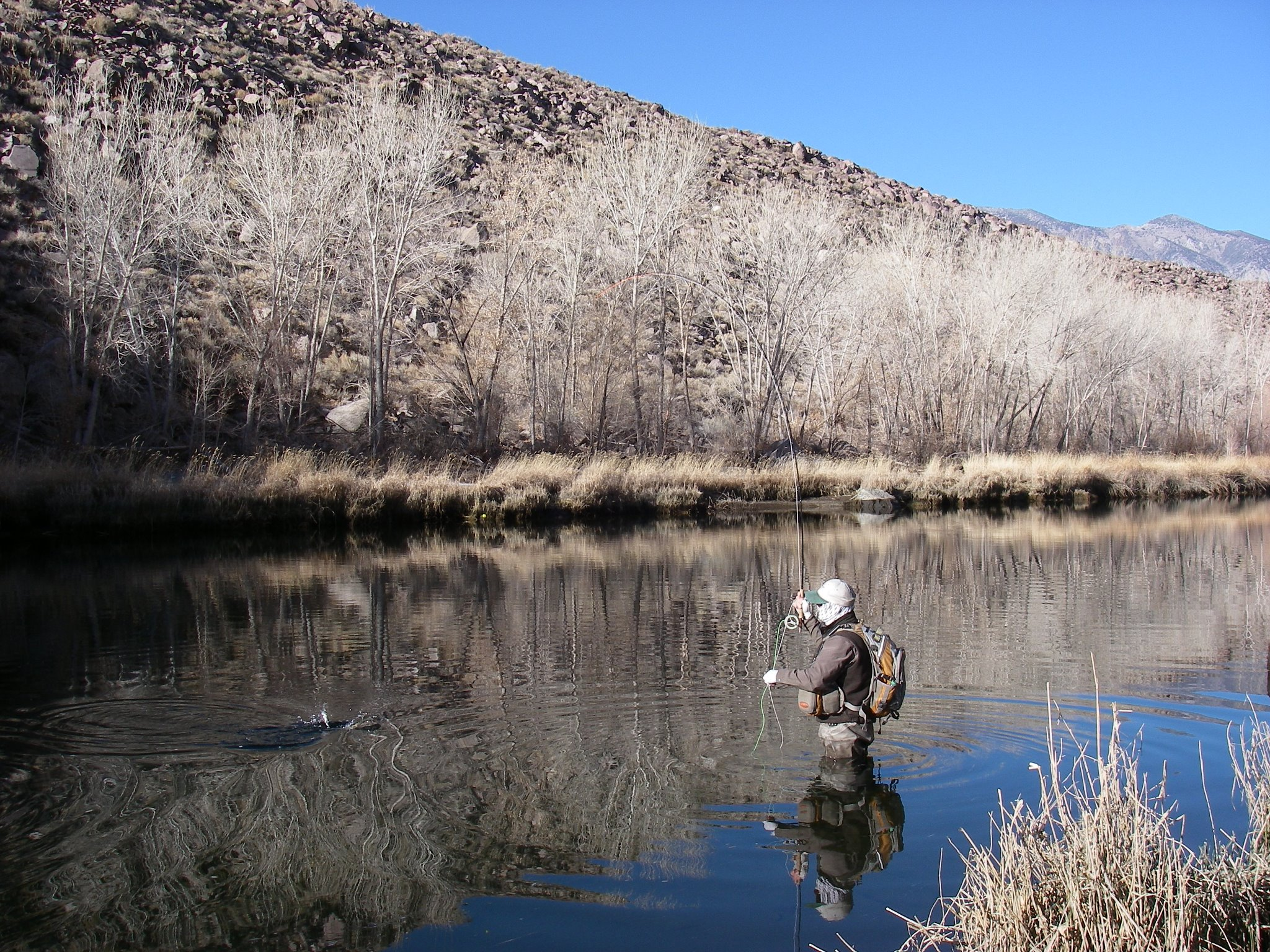 A fly fisherman casting while wading in Pleasant Valley Reservoir.