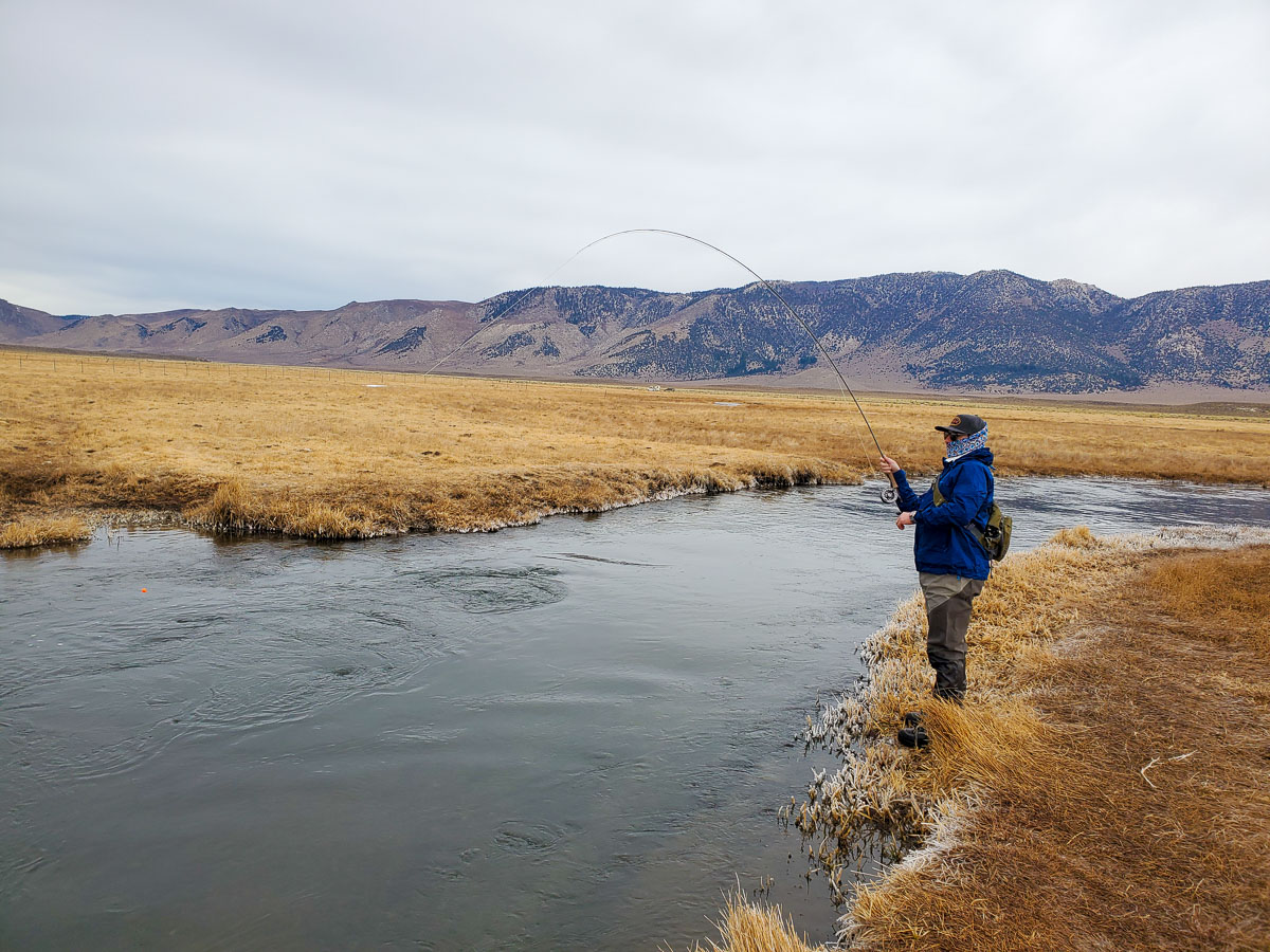 A fly fisherman fishing the Upper Owens River from while standing on the bank and fighting a large rainbow trout.