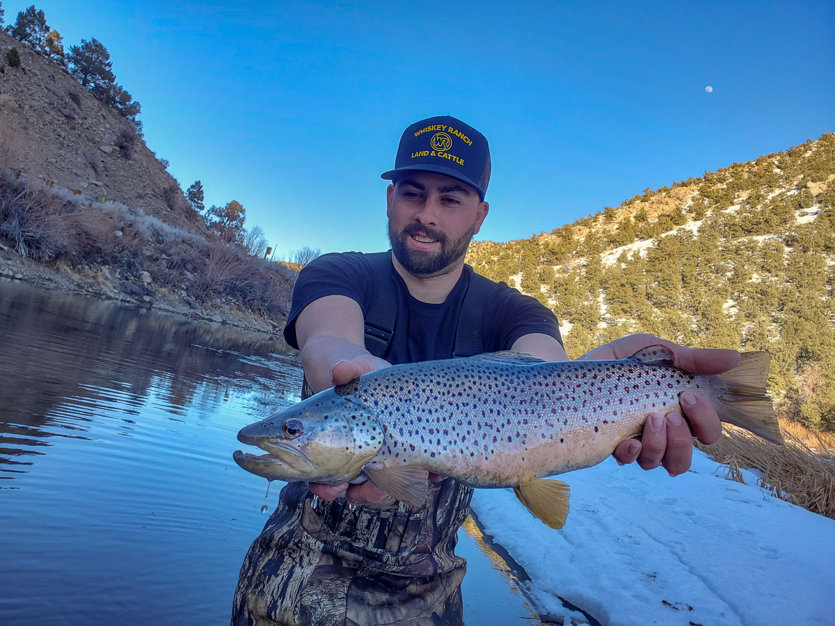 A fly fisherman holding a giant brown trout on the East Walker River.
